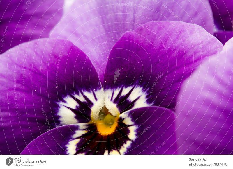 Blume Natur Pflanze schön Farbe weiß Tier Gefühle Wiese Garten Park wild Wachstum Dekoration & Verzierung Lebensfreude violett