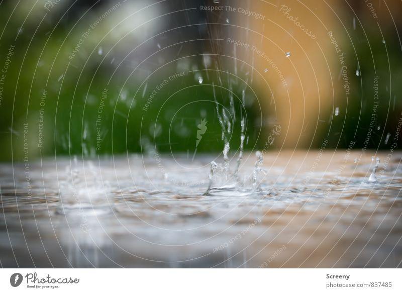 Plitsch Platsch Sommer Herbst Wetter schlechtes Wetter Regen Wasser klein nass Stimmung Reinheit Traurigkeit spritzen Farbfoto Detailaufnahme Makroaufnahme