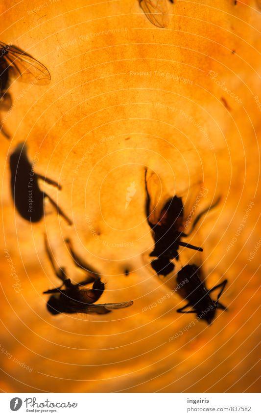 Auf den Leim geflogen Tier Totes Tier Fliege Insekt Insektenschutz Schädlingsbekämpfung hängen klein gelb schwarz skurril Stimmung Tod Vergänglichkeit kleben