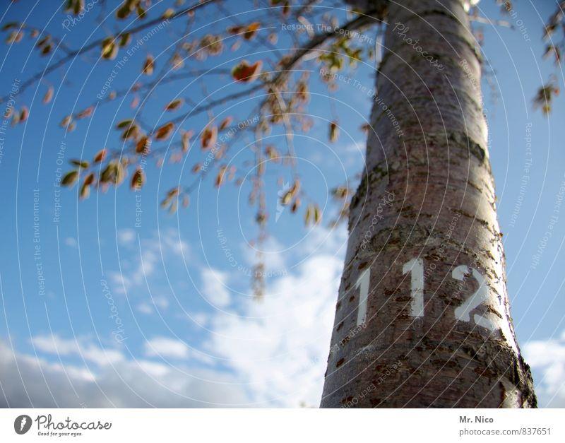 notrufbaum Himmel Baum Blatt Wolken Wald Umwelt Holz Garten Park groß Schönes Wetter Ast Ziffern & Zahlen Baumstamm Umweltschutz Baumrinde