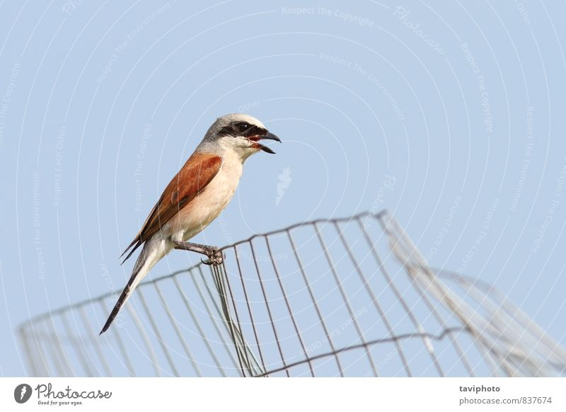 Himmel Natur Mann schön Farbe Sommer rot Tier Erwachsene braun Vogel wild Fotografie beobachten Sauberkeit Beautyfotografie