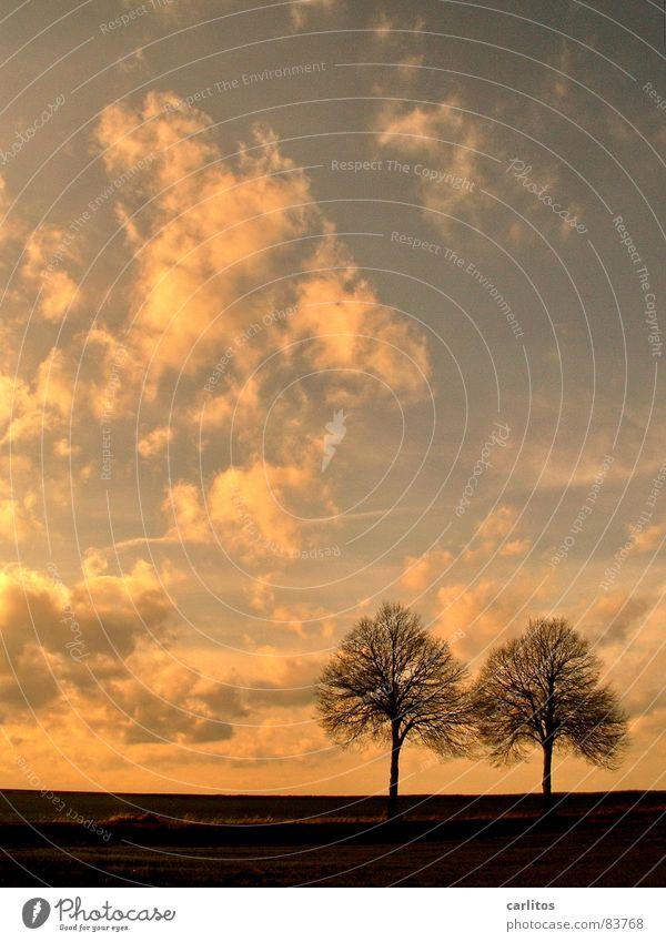 Roger & Tony Baum Horizont Straßenrand Weißabgleich Ölgemälde Herbst Zwilling Tierkreiszeichen Valentinstag Wetter Die Zwei Himmel Kitsch heile welt Paradies