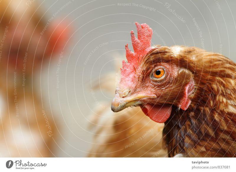 Frau Natur schön Farbe rot Landschaft Tier Erwachsene natürlich braun Vogel authentisch stehen Feder Aussicht Lebewesen