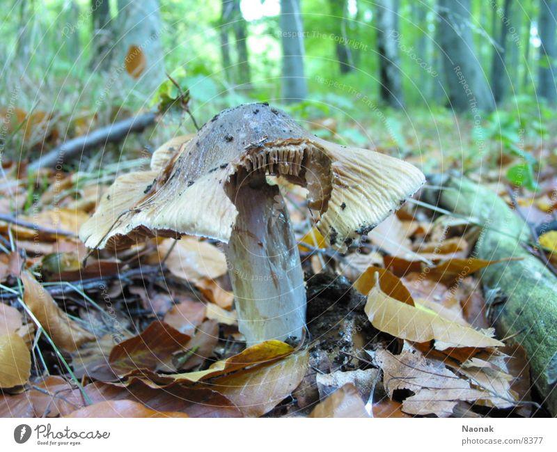 waldboden Baum Blatt Wald Pilz beißen