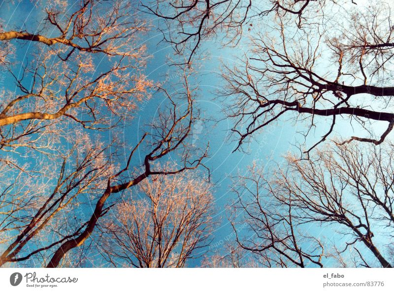 meeting Himmel Baum Winter Wald kalt Herbst Ast Sonntag