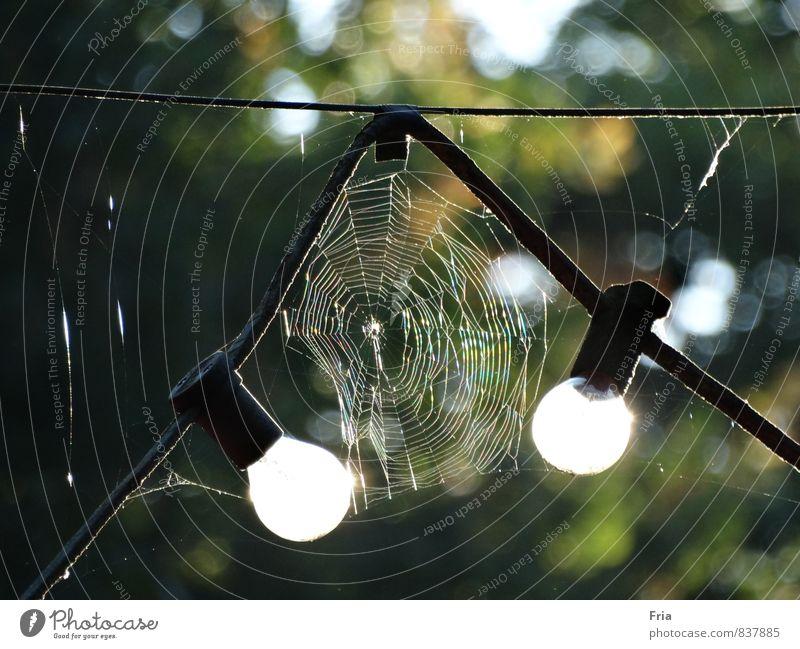 Morgenlicht Umwelt Sonnenlicht Sommer Schönes Wetter Park Spinne Fährte Glühbirne Glas grün weiß Romantik geduldig Idylle Natur Spinnennetz Lichterkette