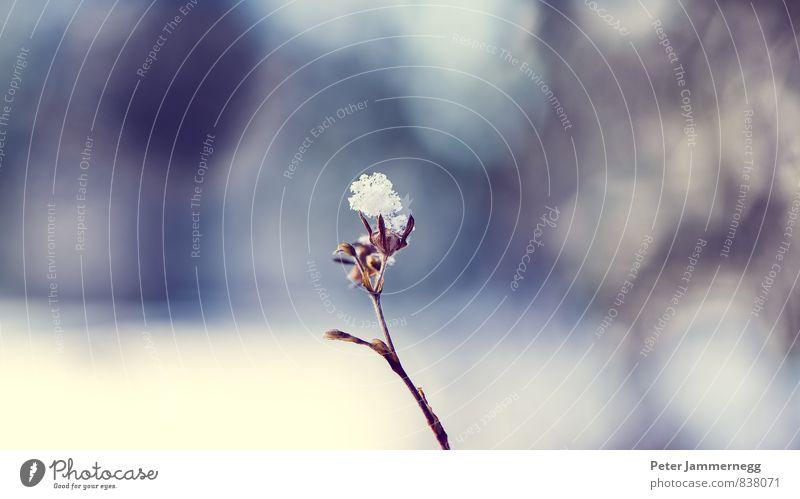 Winter Snow Flower Natur blau Stadt Pflanze schön Wasser Blatt Tier Schnee Blüte Frühling Garten braun Deutschland Luft