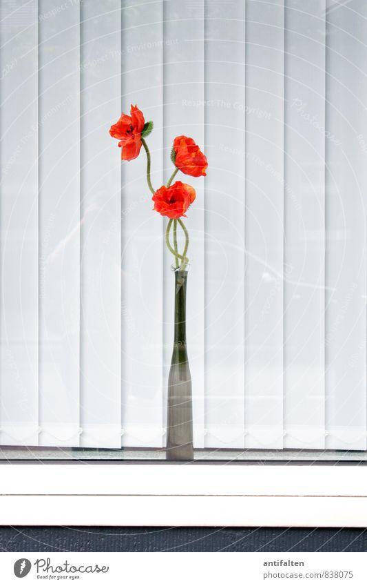 Klatschrose Stadt weiß Haus schwarz Fenster Wand Mauer Gebäude Fassade orange PKW Dekoration & Verzierung Glas Fröhlichkeit ästhetisch Blühend