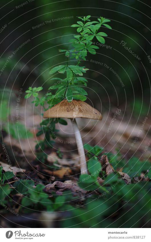 II Umwelt Natur Pflanze Gras Sträucher Blatt Grünpflanze Wildpflanze Pilz Wald Waldboden entdecken Blick dünn authentisch frisch einzigartig lang natürlich rund