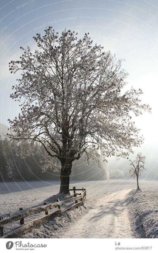 Winterreif weiß Baum ruhig kalt Schnee Wege & Pfade Eis Frost Jahreszeiten Zweig Gasse Raureif Esche