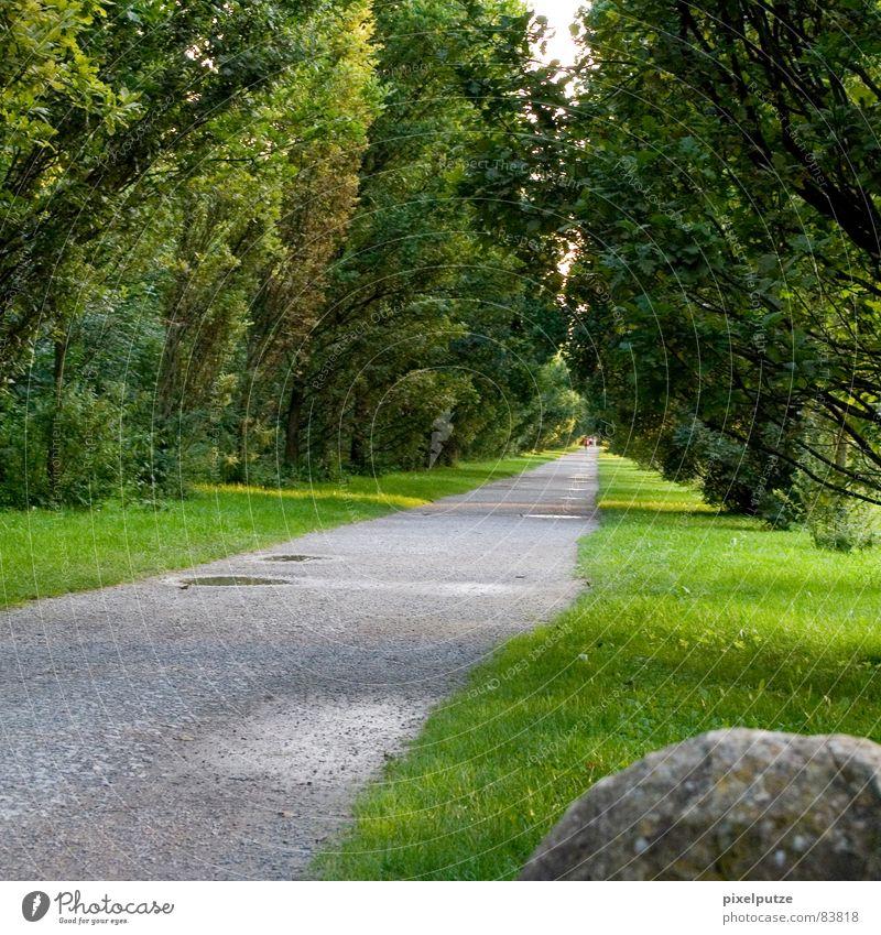 | steiniger weg Allee Baum Richtung grün Pfütze Physik Fluchtpunkt Wiese Mitte Zukunft Kunst Kultur Erfolg monrepos Wege & Pfade Stein Straße Natur Wärme Linie