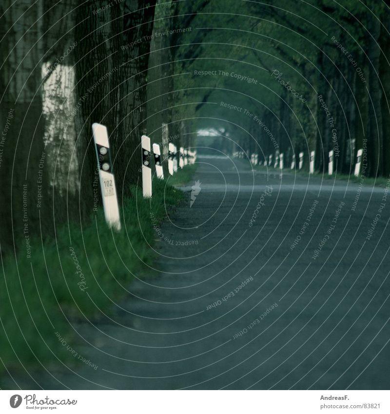 Landstraße grün Baum Straße Wege & Pfade Verkehr Geschwindigkeit gefährlich bedrohlich fahren Ast Rasen Asphalt Landwirtschaft KFZ Verkehrswege Baumstamm
