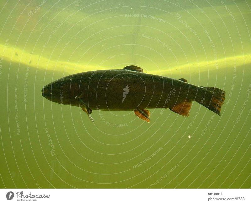 blubb blubb See Teich Natur Wasser Fisch