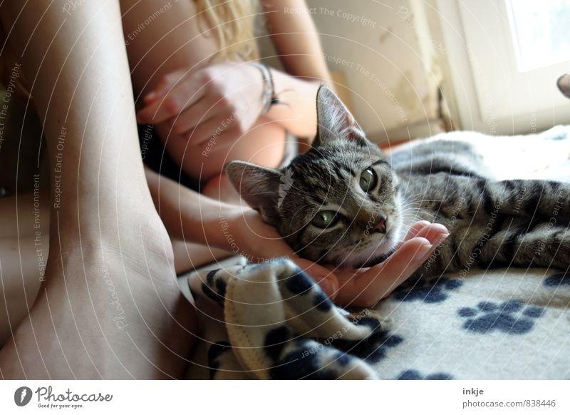 Katzenkinder Katze Mensch Jugendliche Junge Frau Hand ruhig Mädchen Freude Tier Tierjunges Leben Gefühle Liebe Spielen liegen Freizeit & Hobby