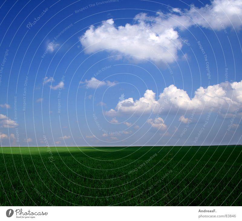 winter ist doof. Maria Himmelfahrt Schönes Wetter Sommer Sonne Wolken grün Wiese Gras Feld Frühling Physik Sonnenstrahlen transpirieren Spaziergang Sauberkeit