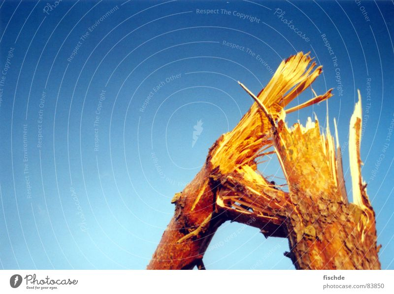 einfach durch-gebrochen!! Himmel Baum Holz Denken braun Wind kaputt Unwetter Sturm Baumstamm Zerstörung Blauer Himmel Baumrinde Schwäche Kiefer