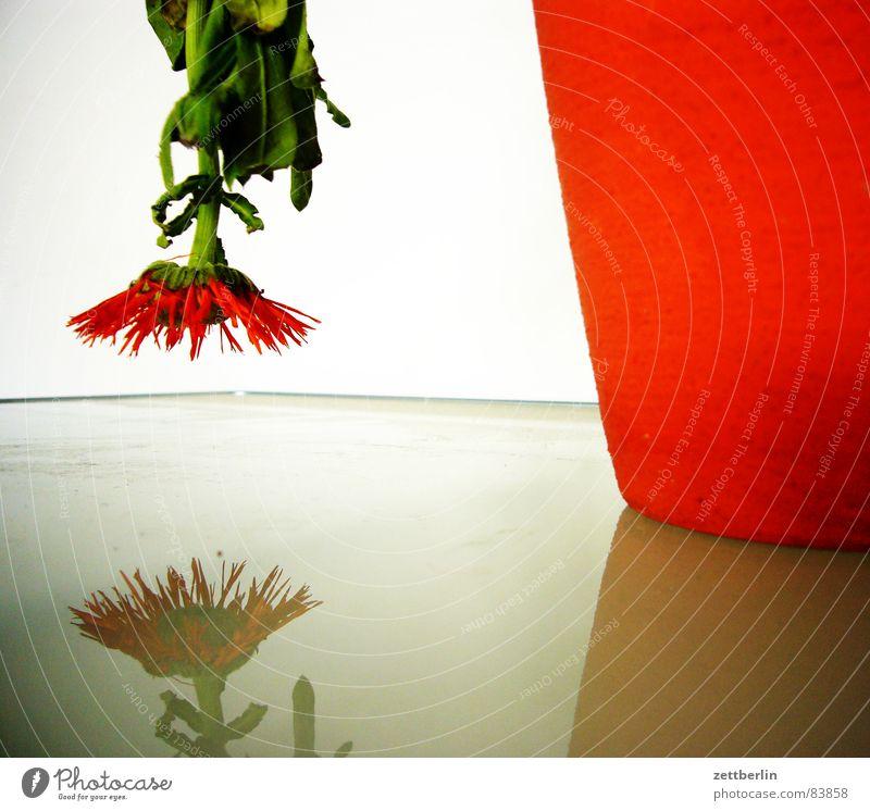Geburtstag rot Blume Blüte Traurigkeit Glas Dekoration & Verzierung Vergänglichkeit Ende unten Blühend Stengel Stillleben vertrocknet Gegenteil abwärts Wandel & Veränderung