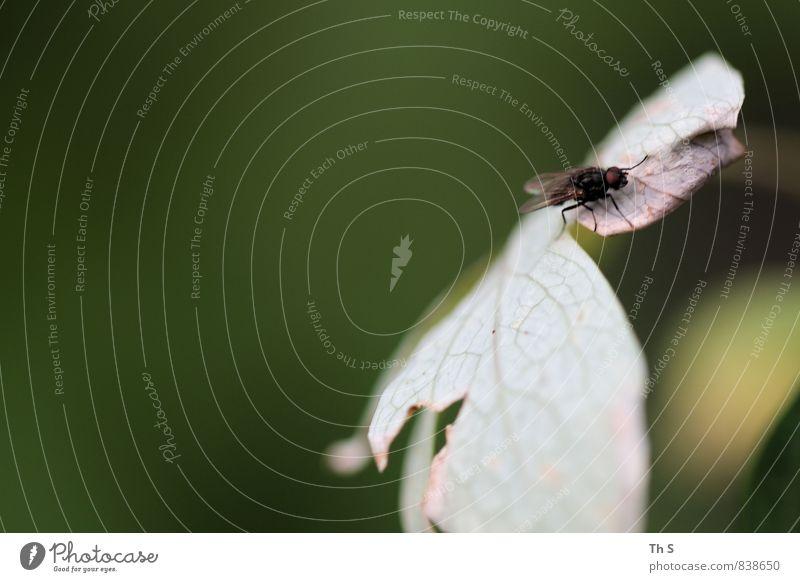 Fliege Natur Pflanze Sommer Blatt Tier Frühling elegant authentisch ästhetisch beobachten einzigartig Gelassenheit