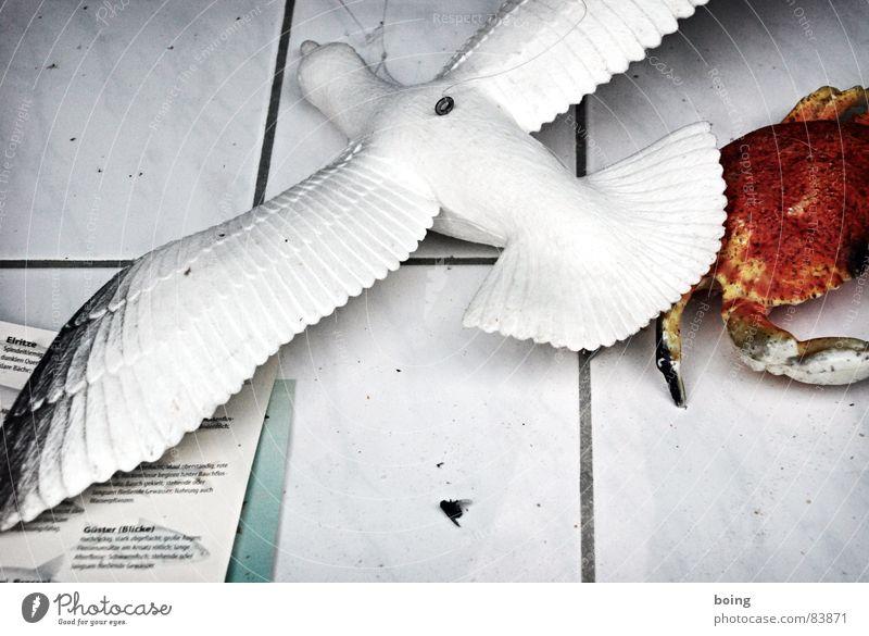 Krabbe fängt Möwe. Fliege stellt sich tot und beobachtet. Vogel Lebensmittel Erfolg frisch Fisch Dekoration & Verzierung Sauberkeit Fliesen u. Kacheln Ladengeschäft Mobilität Möwe Theke Fischer Schaufenster Krebstier Schädlinge