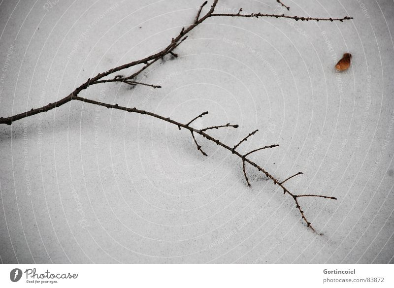 Grabesstille weiß Winter ruhig schwarz kalt dunkel Schnee Tod Holz Traurigkeit braun Eis trist Frost Trauer Ast