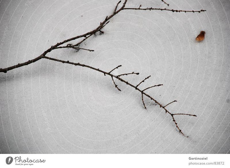 Grabesstille Winter Schnee Eis Frost Holz dunkel trist braun schwarz weiß Friedhof Schneedecke Zweig Ast Traurigkeit kalt Tod ruhig Sorge Trauer erstarren