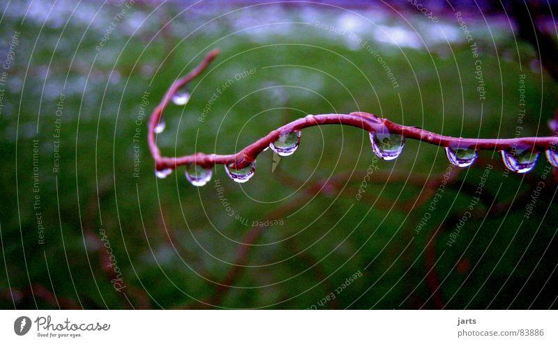 10 Tropfen Wasser Regen Wassertropfen nass Ast