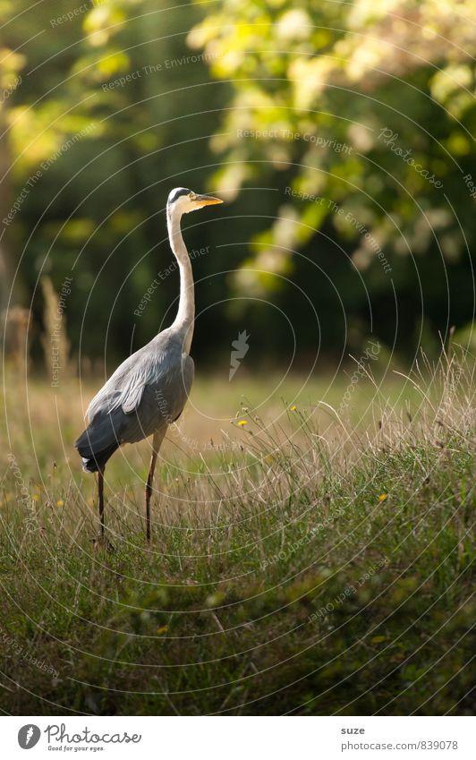 Der Sommerspaziergang Natur schön grün Landschaft ruhig Tier Wiese Gefühle natürlich gehen Vogel Park wild elegant Zufriedenheit