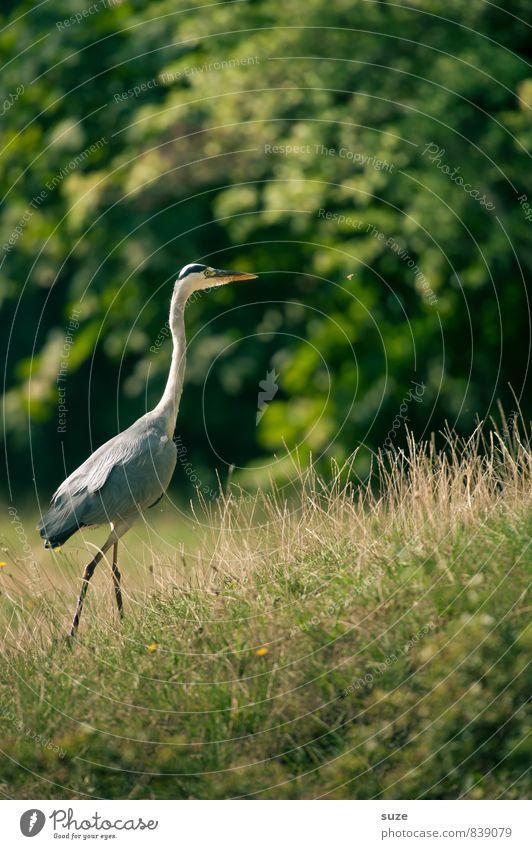 Herr Strese auf neuen Wegen Natur grün Sommer Landschaft Tier Umwelt Wiese natürlich Vogel Park wild elegant Wildtier authentisch Feder ästhetisch