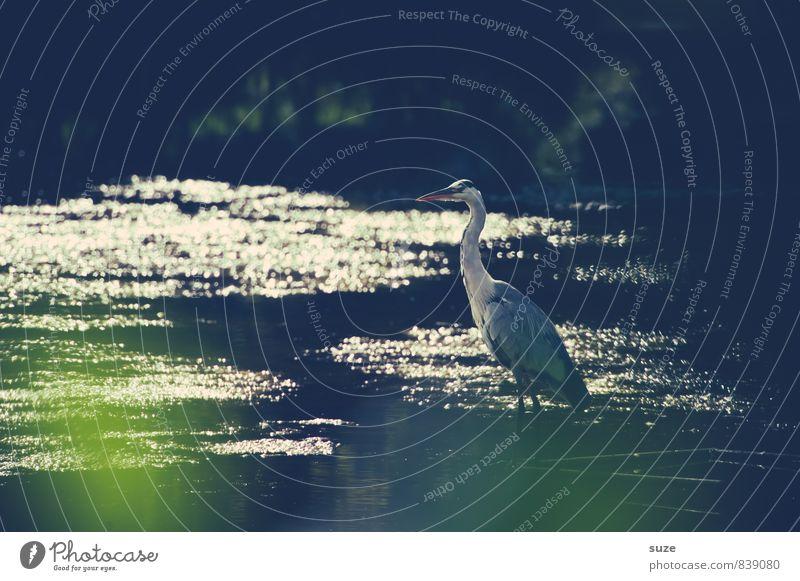 Im Funkeln der Stille Natur Wasser Landschaft Tier dunkel kalt Umwelt natürlich außergewöhnlich See Vogel glänzend wild elegant Wildtier authentisch