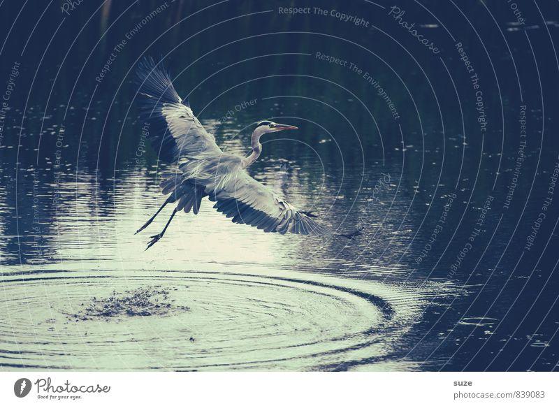 Auf zu neuen Ufern Natur Wasser Landschaft Tier Umwelt Bewegung natürlich See fliegen Vogel wild elegant Wildtier authentisch ästhetisch Beginn