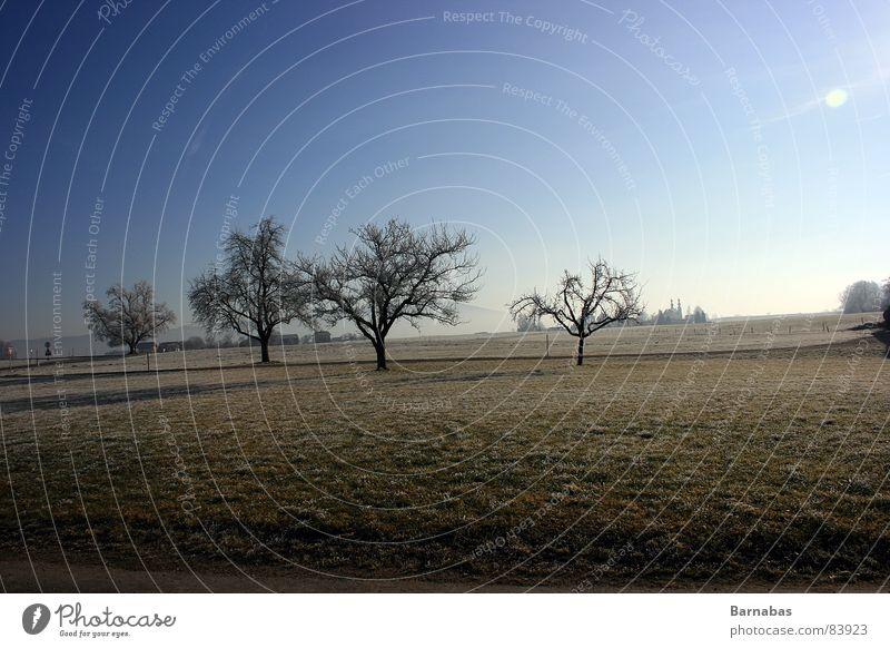 Distance Divine Baum Wiese Bayern Berge u. Gebirge Landschaft Himmel Sonne