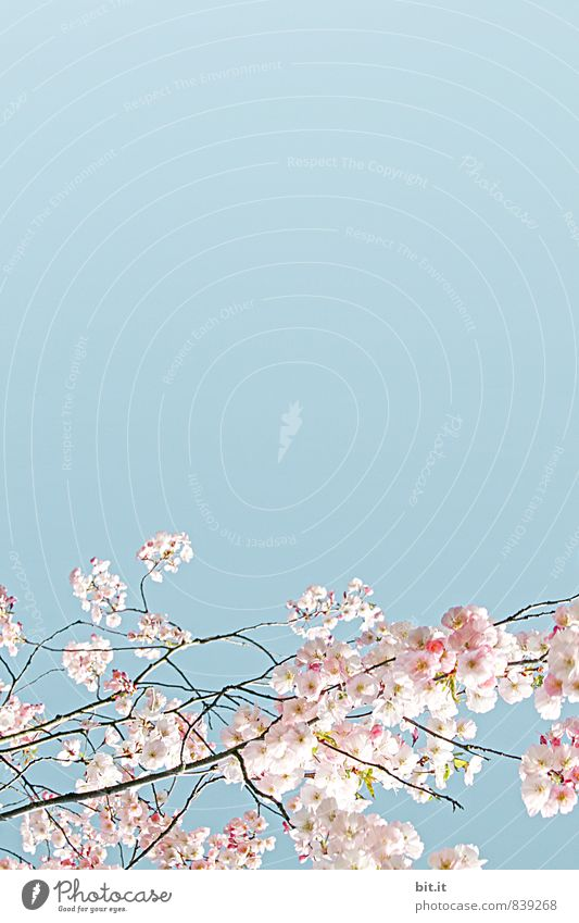 Blütenborte Himmel Natur Ferien & Urlaub & Reisen Pflanze schön Sommer Baum Blume ruhig Frühling Glück Feste & Feiern Stimmung Zufriedenheit