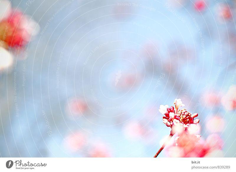 zartes Chaos Natur blau Sommer Blume Blüte Frühling Glück Feste & Feiern Garten Kunst rosa Design Dekoration & Verzierung Geburtstag Lebensfreude Kitsch