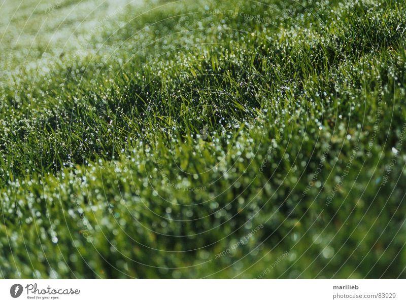 Es grünt das Gras Sommer Wiese nass Sportrasen Tau Halm Grünfläche