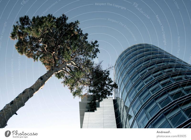 Baum und Haus Natur Umwelt Fenster Glas Fassade Turm Klarheit Schönes Wetter Baumstamm Unternehmen Gegenteil Kiefer Agentur Bürogebäude