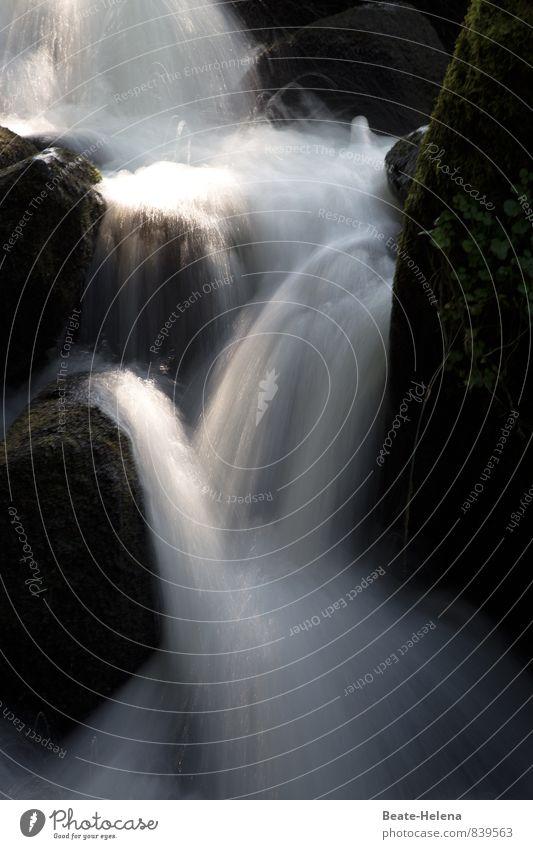 Feuchtigkeit | erfrischt die Haut Natur weiß Wasser Sommer Landschaft ruhig schwarz Leben Stein Treppe Wassertropfen ästhetisch beobachten Sauberkeit fallen