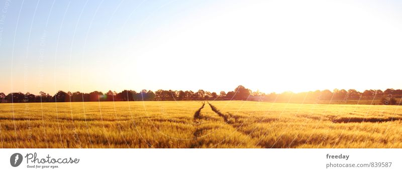 Northwest Germany Himmel Natur Pflanze Sommer Baum Landschaft Lebensmittel Luft Wachstum Gold Schönes Wetter Landwirtschaft Glaube Getreide Ernte Wolkenloser Himmel