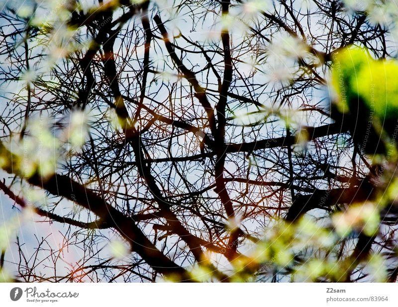 forest fantasies Wald Fantasygeschichte Reflexion & Spiegelung grün Geäst Baum Natur Blatt Unschärfe durcheinander glänzend träumen kuddelmuddl reflektion Ast