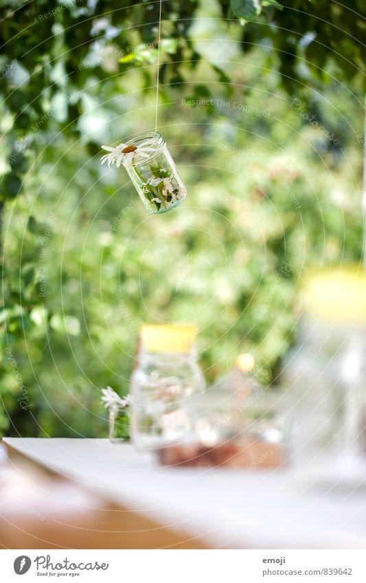 Deko Pflanze grün Sommer Blume natürlich Frühling Garten Dekoration & Verzierung Schönes Wetter