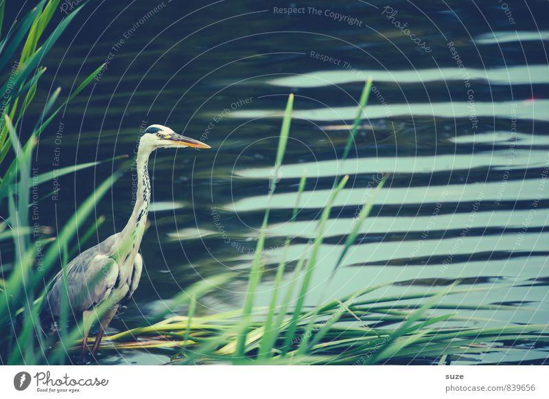 SPA-Strese am See elegant Umwelt Natur Landschaft Tier Wasser Wellen Seeufer Teich Wildtier Vogel 1 stehen warten ästhetisch authentisch fantastisch natürlich