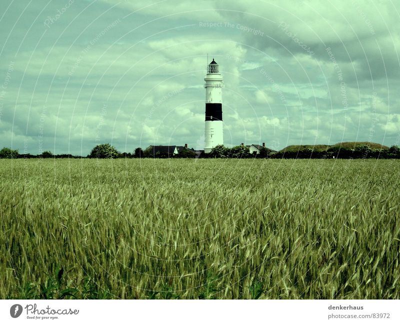 Mehr Licht! Leuchtturm Meer Lampe Küste rot weiß Kornfeld Feld Wolken Horizont Nostalgie Mittag Wahrzeichen Denkmal Turm hell Graffiti Nordsee Getreide