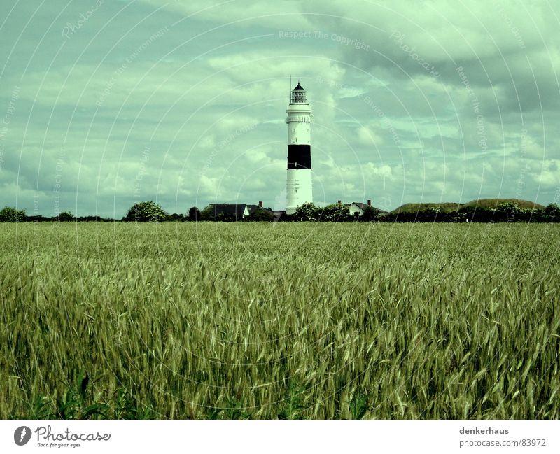 Mehr Licht! weiß Meer rot Wolken Lampe Graffiti hell Feld Küste Horizont Turm Getreide Denkmal Wahrzeichen Leuchtturm Nordsee