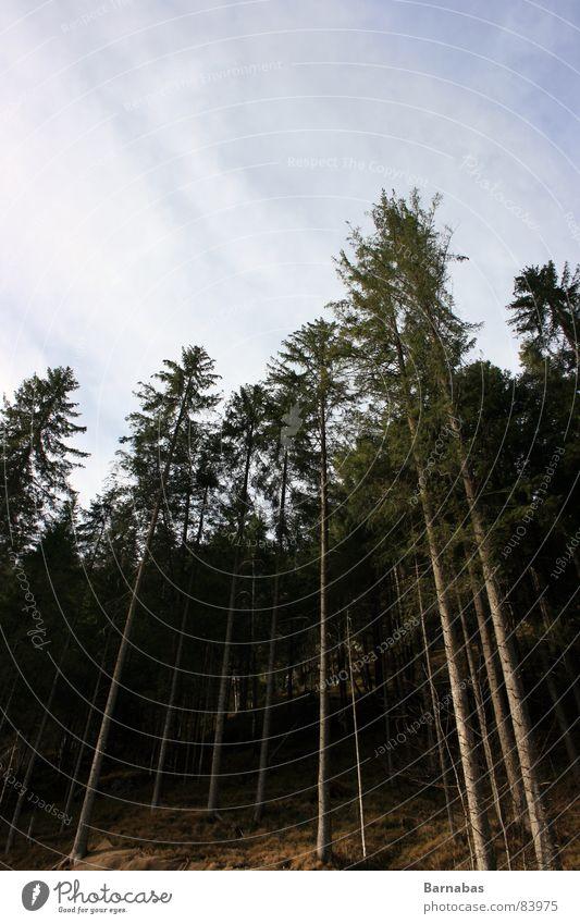 Up There Wald Baum Skandinavien groß Macht Norwegen Himmel Perspektive