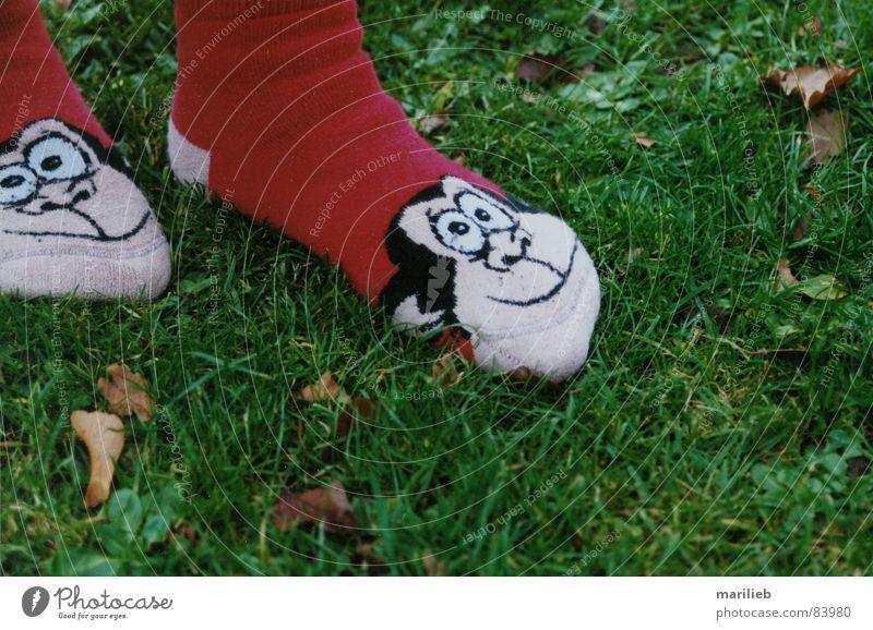 Auf der Pirsch... grün Sommer Freude Tier Wiese Gras Sportrasen Strümpfe Affen Grünfläche