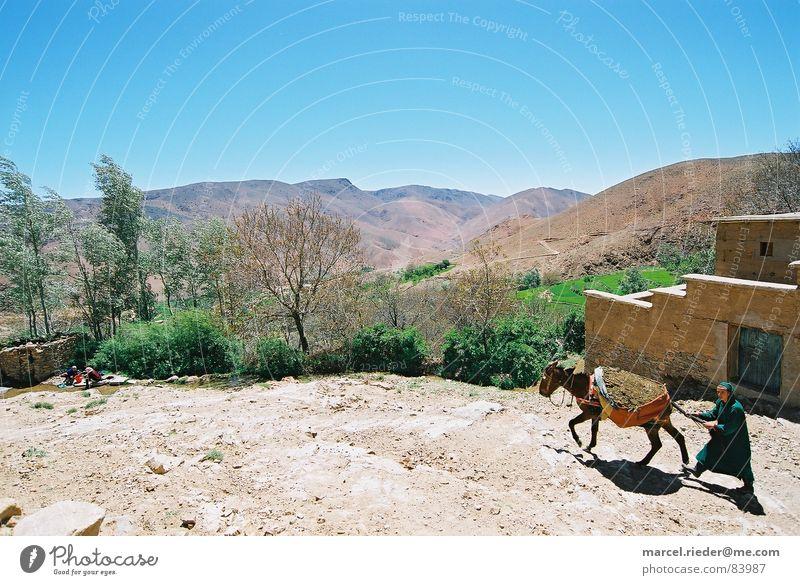 Mann mit Esel Marokko Afrika Steinwüste Bibel Neues Testament Altes Testament Mineralien Säugetier Berge u. Gebirge Atlas Wüste Berber Vergangenheit