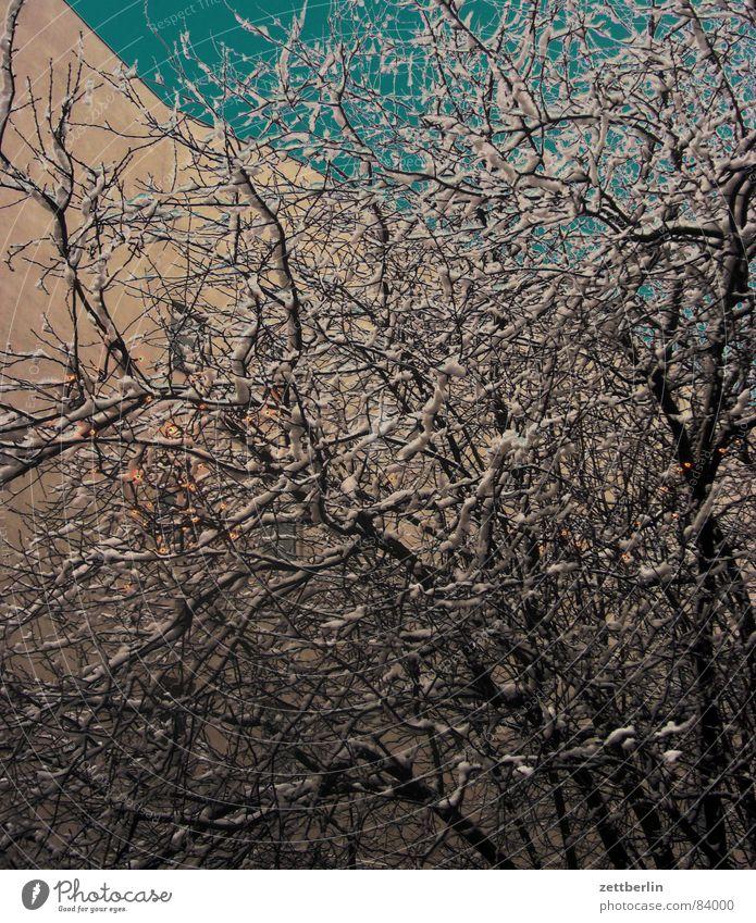 Winter Nebensaison Pulverschnee Schneedecke Raureif Sträucher Lichterkette Fassade Haus Eischnee Angelrute Hecke Urwald Stauden Dornbusch straßenbegleitgrün