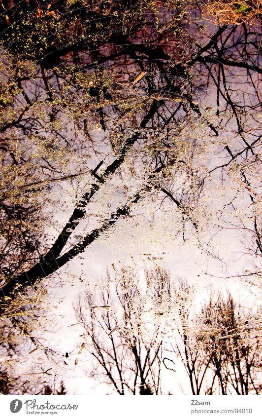 forest fantasies II Schneelandschaft Wald Fantasygeschichte Reflexion & Spiegelung grün Geäst Baum Natur Blatt Unschärfe durcheinander glänzend träumen magenta