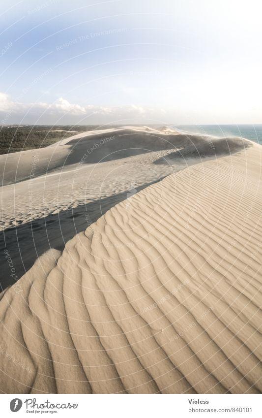 Wohlfühloase | der weg ist weit .. Natur Landschaft Urelemente Sand Sommer Strand Wüste Oase entdecken ästhetisch außergewöhnlich Wanderdüne Rubjerg Knude