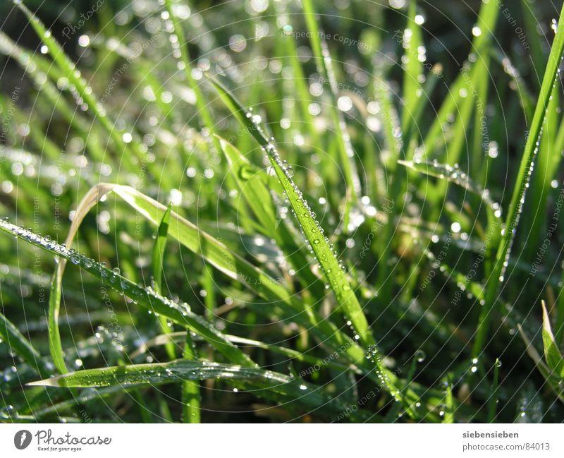 Wenn die Sonne scheint... Natur schön grün Freude Wiese Gras Beleuchtung glänzend Wassertropfen nass Seil frisch Rasen feucht Tau Halm