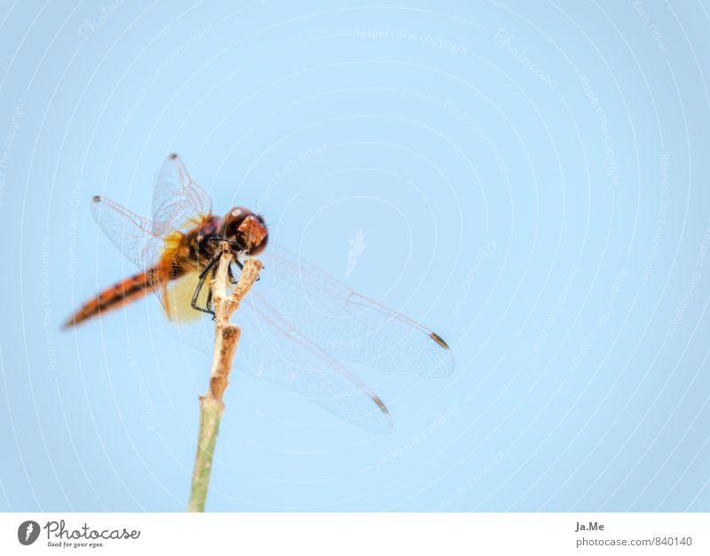 Libelle von Kos Tier Wildtier Flügel Insekt Libellenflügel 1 blau grün rot Farbfoto mehrfarbig Nahaufnahme Detailaufnahme Makroaufnahme Textfreiraum rechts Tag